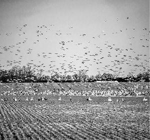 031815 Waterfowl DuBois BW.jpg