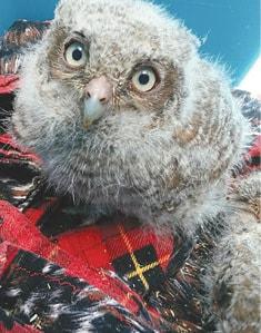 Owls 3 C.jpg