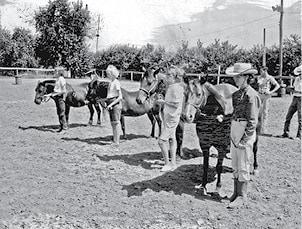 classic photo horse & pony show BW.jpg