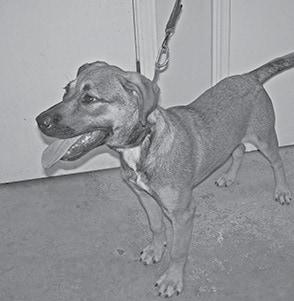 070815 Pet Of The Week BW.jpg