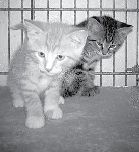071515 Pet Pic BW.jpg