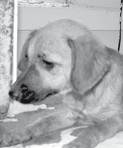 Shelter Pet BW.jpg
