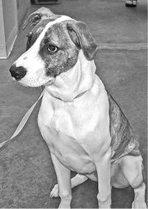 080515 Shelter Dog BW.jpg
