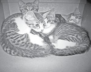 Shelter Kats BW.jpg