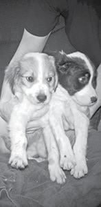 091615 Shelter Dogs BW.jpg
