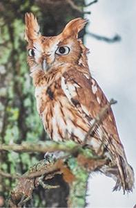 120215 Owls Tree C.jpg