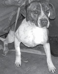 Shelter Dog BW.jpg