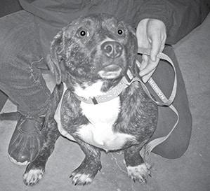 Pet of the week BW.jpg