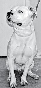 Pet for Adoption BW.jpg