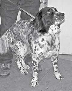 050416 Pet Pic BW.jpg