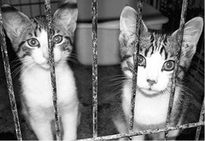Shelter Kittens BW.jpg