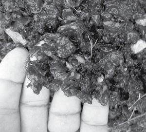 Master Gardener BW.jpg