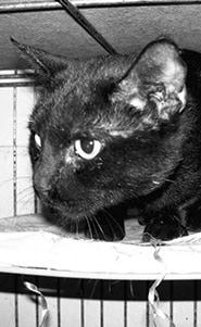 Shelter Cat BW.jpg