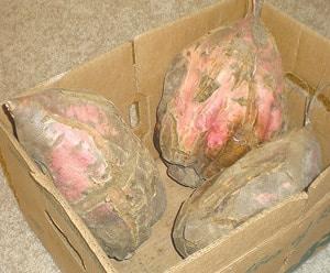 Sweet Potatoes C.jpg