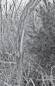 Deer Damage 2 BW.jpg