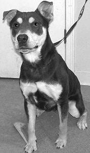 120716 Shelter Dog BW.jpg