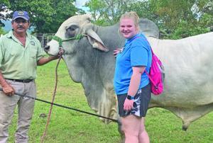 Brahman Cattle Farm C