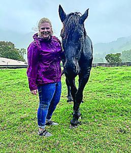Horse Farm C
